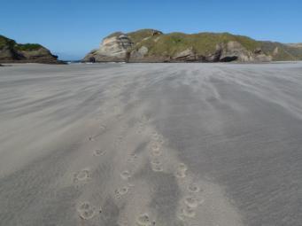 horse footprints